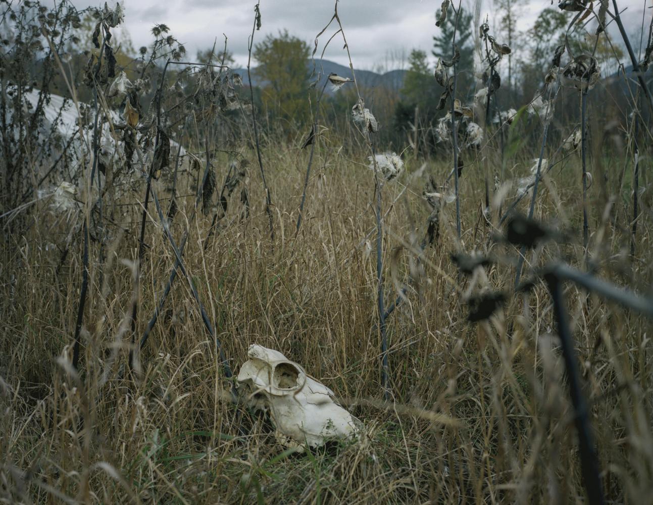 skull-field