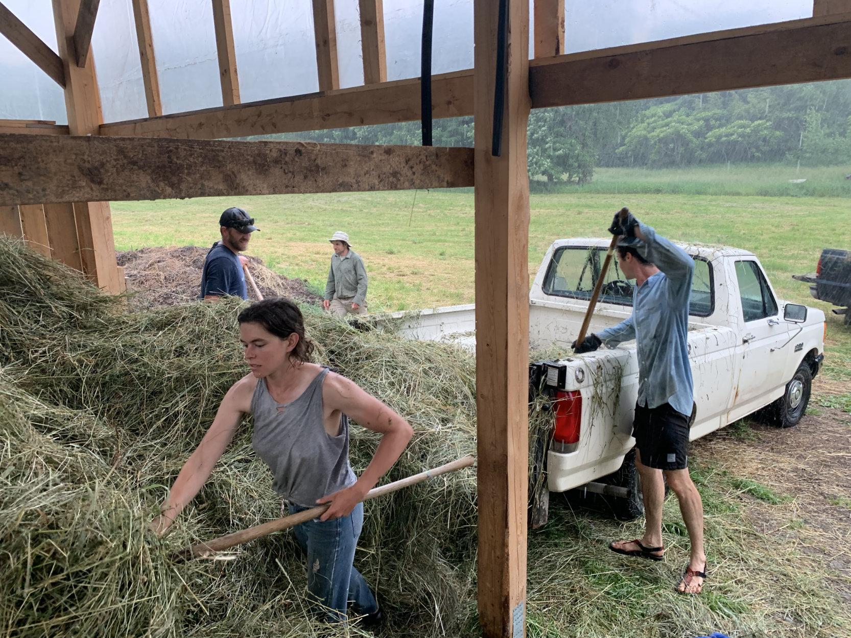 bringing-in-hay